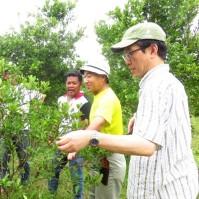 PHOTO Calamansi pruning technique
