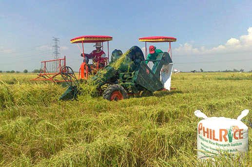 PHOTO Filipino agricultural workers run harvesting machines