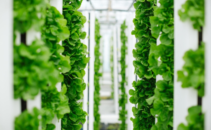 Bayer partners with Temasek of Singapore for vegetable seed distribution in Ph in light of urban farming trend due to COVID19