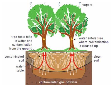6 phytoremediation tree species identified by ERDB for Palawan mercury mine'srehab