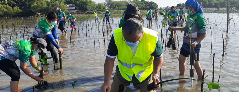 Degraded mangrove coastal area adopted by Bayer as Rhizophora farm to help sustain biodiversity, generate livelihood andincome