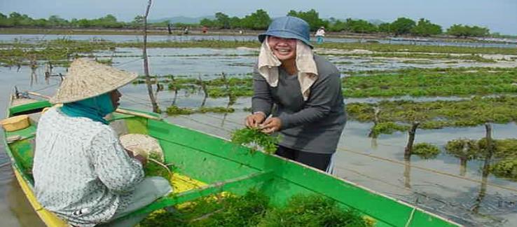 Philippines, India jointly eye $12 billion global seaweedsmarket