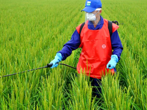 Pilot project in Benguet, Pangasinan, Tarlac to urge farmers to wear personal protective equipment while spraying crop protectionproducts
