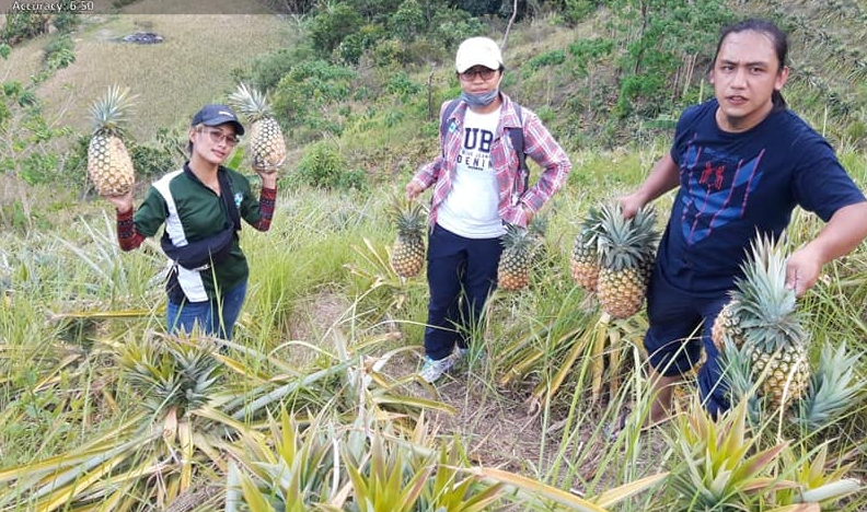 P120M road and P72M RCDG bridge projects bring hope of easier market access for pineapple farmers ofIfugao