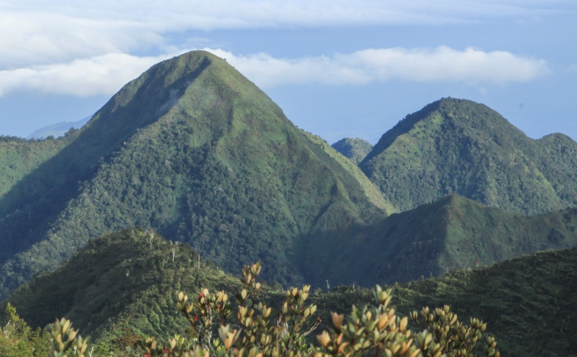 DENR partners with KGV, Forest Foundation, Holcim,  planted more than 300 hectares of coffee, abaca, bamboo, ratttan in Mt.Kitanglad