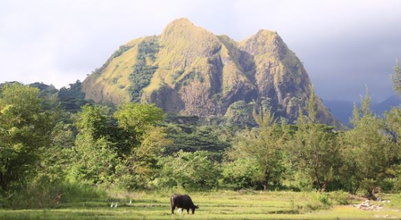 Campaign stepped up to save the critically endangered Tamaraw and its ASEAN Heritage Site habitat Mt.Iglit-Baco